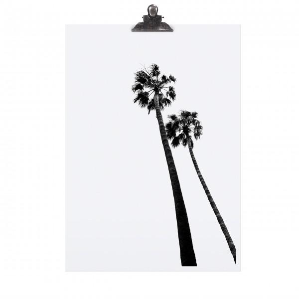 Palmenposter von TAFELGUT!